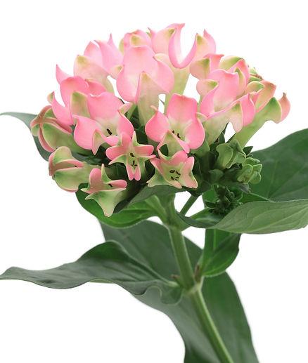 jardin floral design, fort myers, florist, ft,  images, pictures, photos,pink