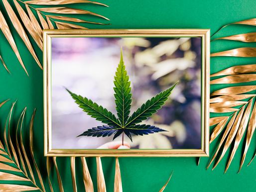 Green Rush: Medical Marijuana Keeping Up with the Demand
