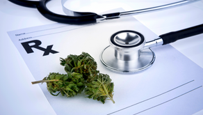 Medical Cannabis Might not Help Most Patients with Chronic Pain