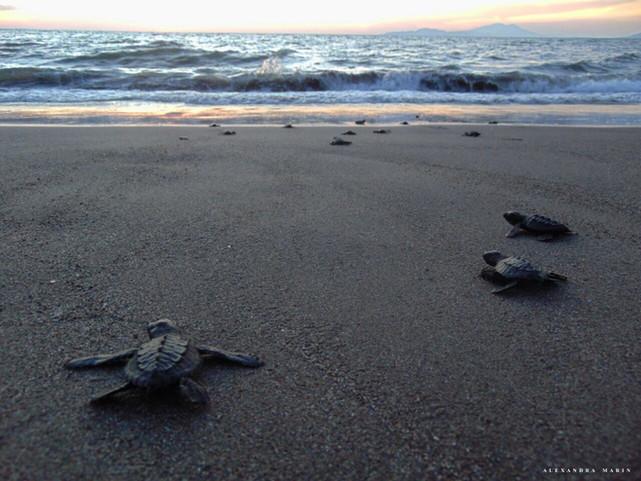 Schildkröten Camp und la Paz