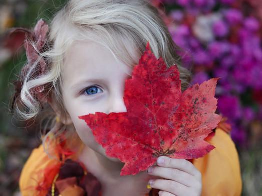 Toutes les couleurs de l'automne.