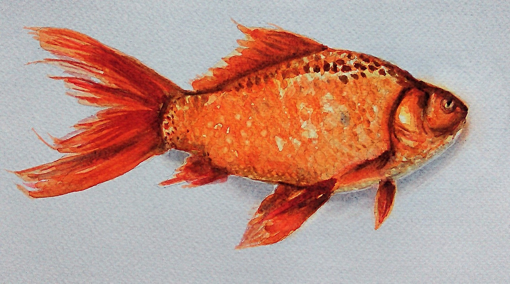 Goldfish life flashes before your eyes when you are about to die