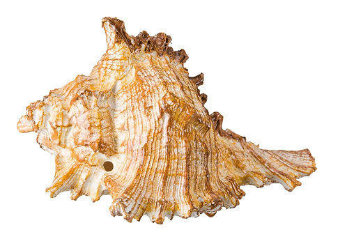 Trixie Shell Fish tank Ornament