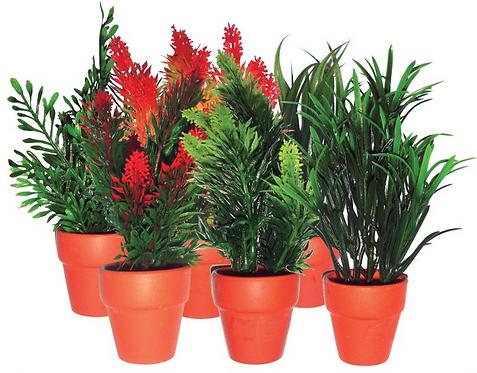 Komodo Small Plant (Assorted)