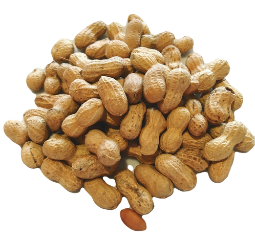 Nuts in Shell