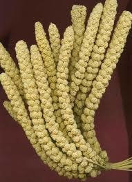 Chinese millet spray (priced individually per kg)
