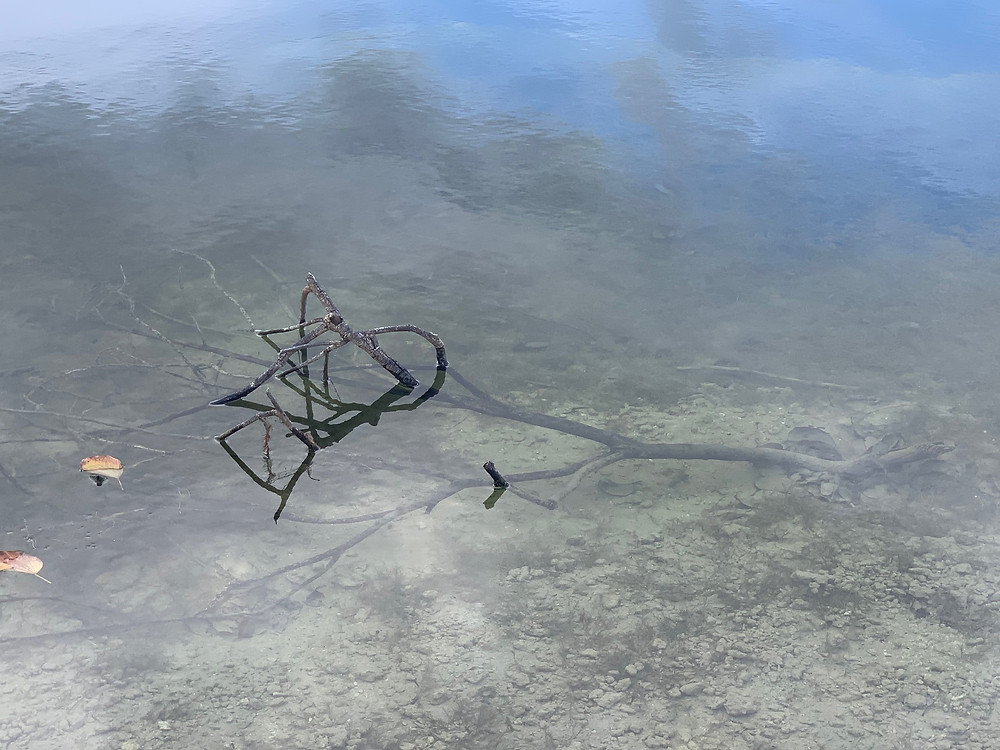 Peacock bass Spawning locations