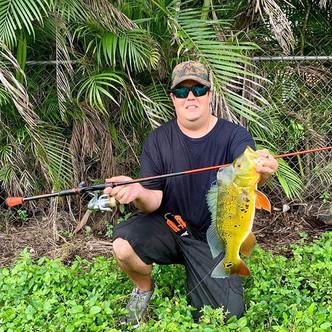 peacock bass caught on speed demon pro rod.