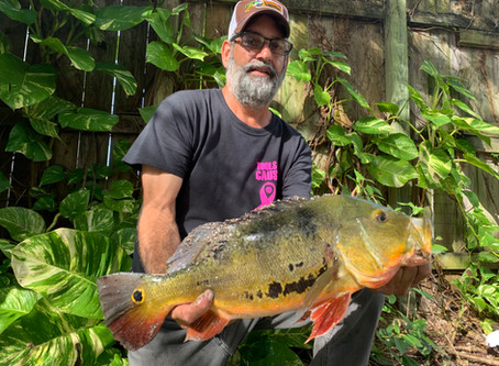 Top 5 fish that Florida Peacock Bass love to eat