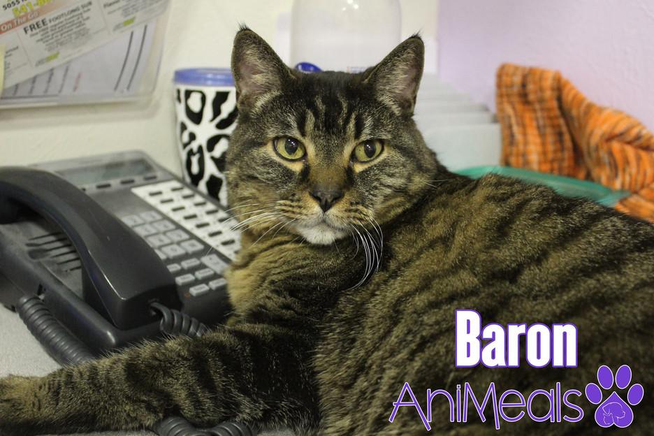 Our Baron Boy!