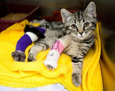 kitten in bandages