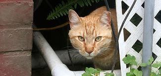 Eartipped cat.jpeg