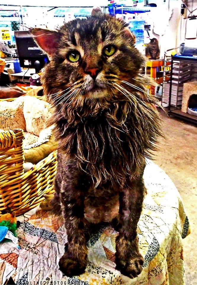 Maximus and the Bobcat
