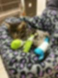 kitten in a cast