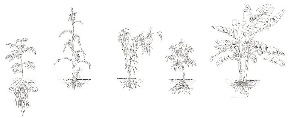05_crop-Growing-Conditions-copy.jpg