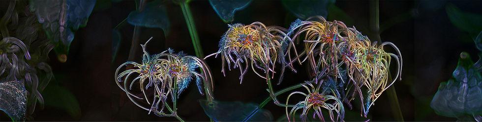 Magical-Flower-KS-Gilesteban-copyright.j