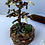 Thumbnail: Fairy Garden Healing Tree