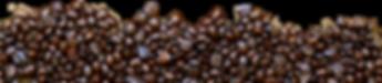 bean back-crop-u275.png