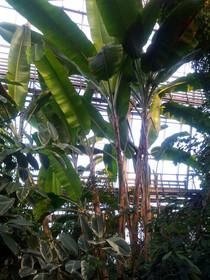Лимонад из лимонов в ботаническом саду.