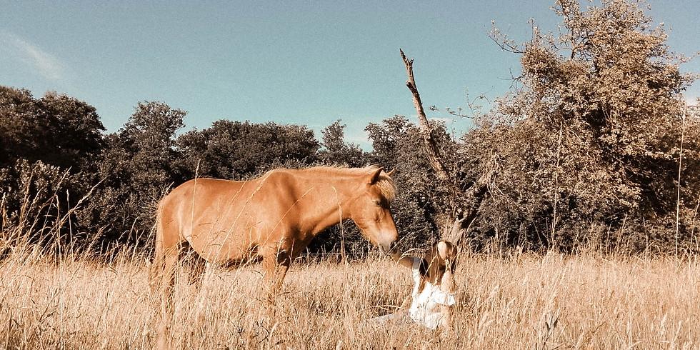 WIESENHOF: Intuitive Kommunikation mit Pferden