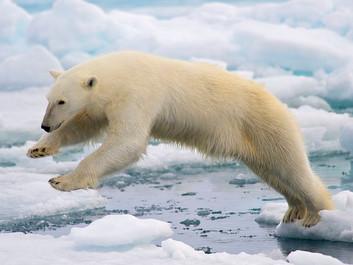 Arktis skrumper til rekordniveau