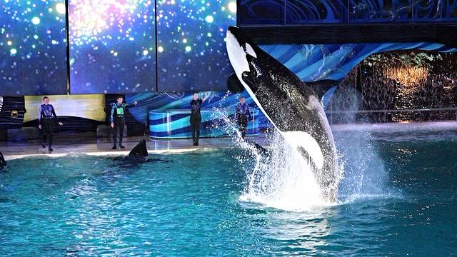 SeaWorld lægger sin strategi om og samarbejder nu med en dyreværnsorganisation. Foto: jannthio/flickr