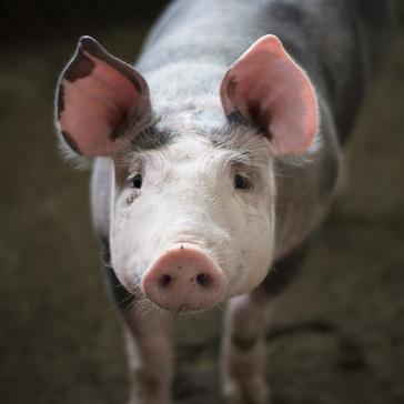Nu må ministeren kræve, at folk, der arbejder med dyr, får relevant uddannelse - undtagen i landbrug