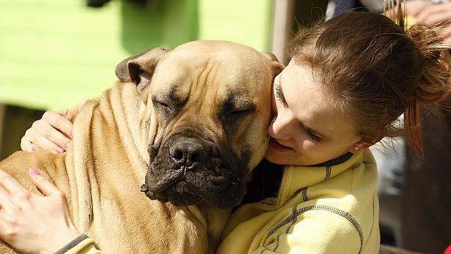For mennesker er et kram en form for omsorg, men for hunden strider det imod dens natur. Foto: Pixabay