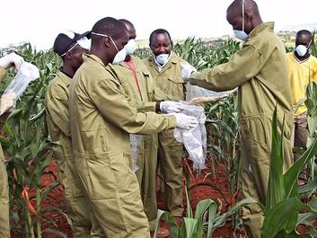 Forskere advarer: Klimaforandringerne vil gøre mere mad giftig