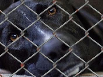 Flertal vil stramme reglerne for dyremishandling