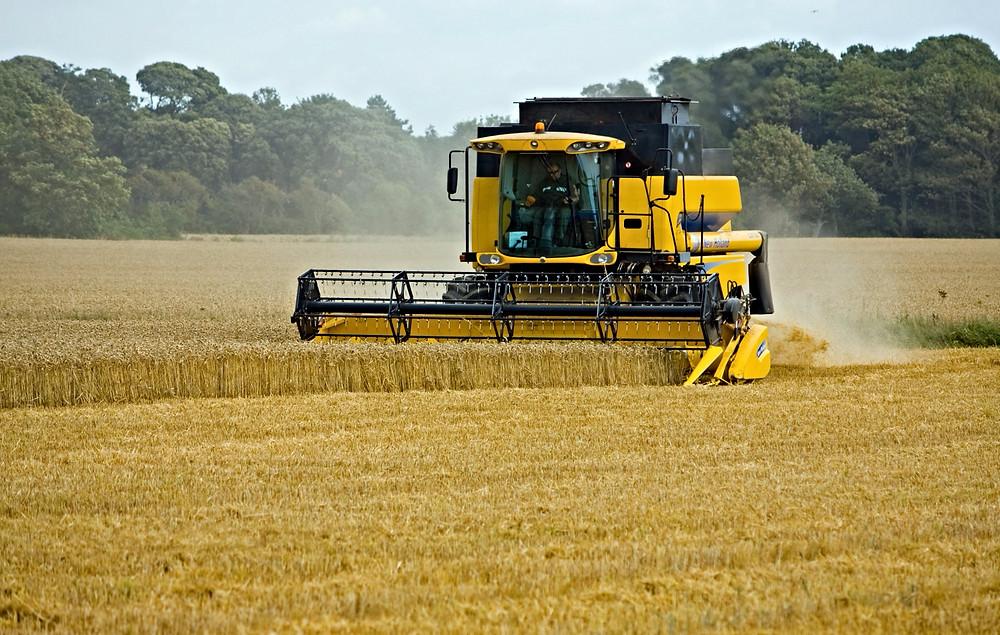 wheat-317021_edited.jpg