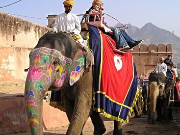 Global rejseportal opfordrer turister til at boykotte elefantridning og selfies