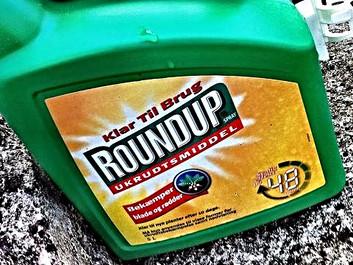 Nyt studie: Roundup er hormonforstyrrende