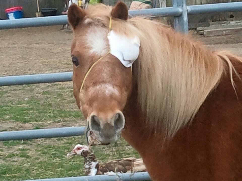 Cowboys øje var inficeret og måtte bortopereres. Foto: Foto: Don't Forget Us Pet Us