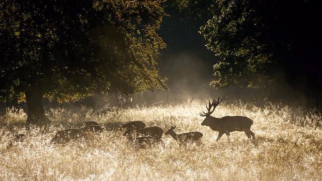 Alternativet har netop fremlagt sin naturplan, der høster stor ros. Foto: Stig Nygaard/flickr