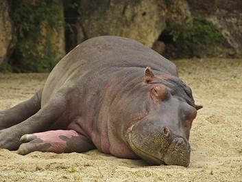 Langvarig tørke tvinger nationalpark til at masseaflive dyr