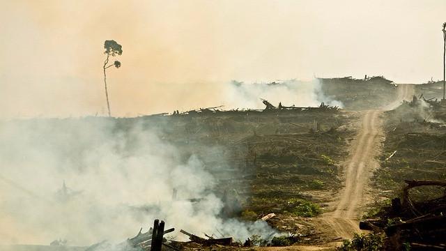 Her ses afbrænding af skovområder i Indonesien i 2009 - hensigten var ifølge Rainforest Action Network at gøre plads til palmeolieproduktionen. Foto: David Gilbert/RAN