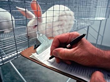 Ny forskning kan redde adskillige dyr fra dyreforsøg
