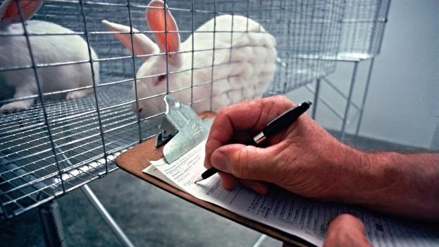 Stamcelleforskning kan erstatte dyreforsøg. Det er både mere etisk og billigere. Foto: USDA/Wikimedia Commons