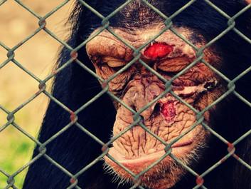 Trump-holdet har gjort livet lettere for dyremishandlere