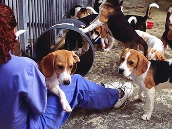 Er det i orden at slå dyr ihjel for at lære mere om dem?