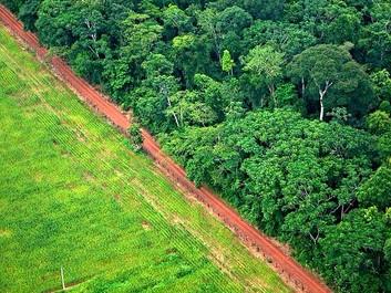 Kød og palmeolie står bag ny fældningsbølge af regnskoven