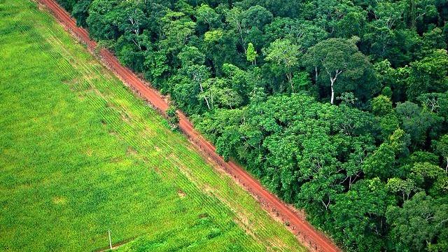 Peru har øget rydningen af regnskoven. Billedet viser et eksempel fra Brasilien, hvor en del af skoven er blevet fældet til fordel for landbrug. Foto: Kate Evans for Center for International Forestry Research (CIFOR)/flickr