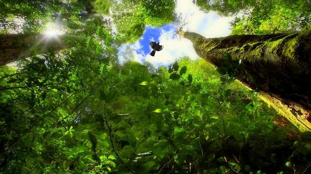 Verdens mest naturrige områder risikerer at miste halvdelen af sine arter, hvis den globale opvarmning når 4,5 grader celsius. Foto: Pixabay