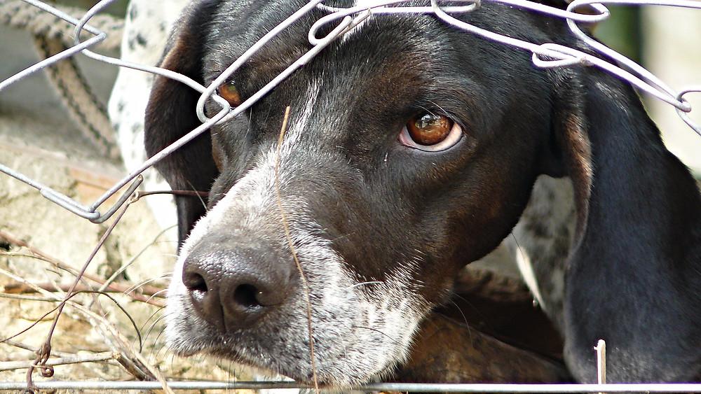 Dyrenes Beskyttelse har modtaget et rekordstort antal anmeldelser om dyreværnssager. Antallet kan skyldes, at flere er blevet opmærksomme på muligheden for at anmelde sagerne. Genrefoto: Pixabay