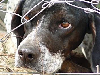 Regeringen giver rekordbeløb til dyr i nød