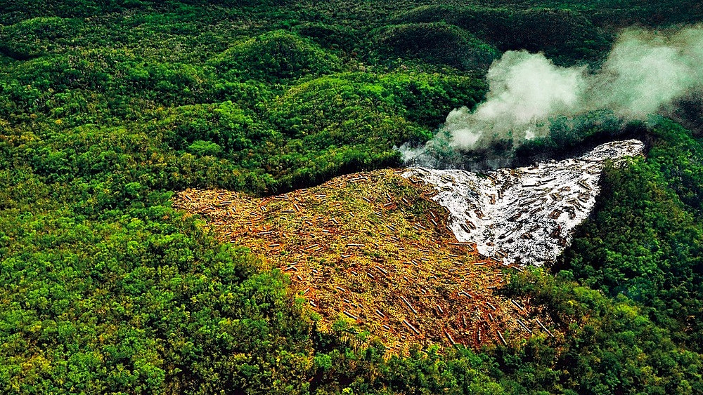 Et skovområde næsten på størrelse med Storbritannien forsvandt i 2015. Foto: Jonathan Guyot