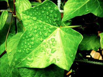 Årelangt studie modsiger klimamyte: Mere CO2 gavner ikke planterne