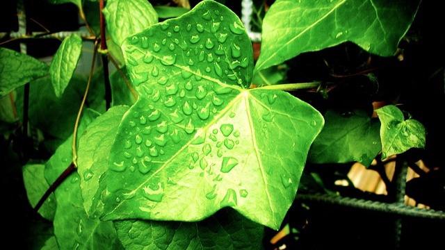 Et nyt studie viser, at planter i et område i Californien ikke nyder godt af mere CO2 og varme i atmosfæren. Foto: Pixabay