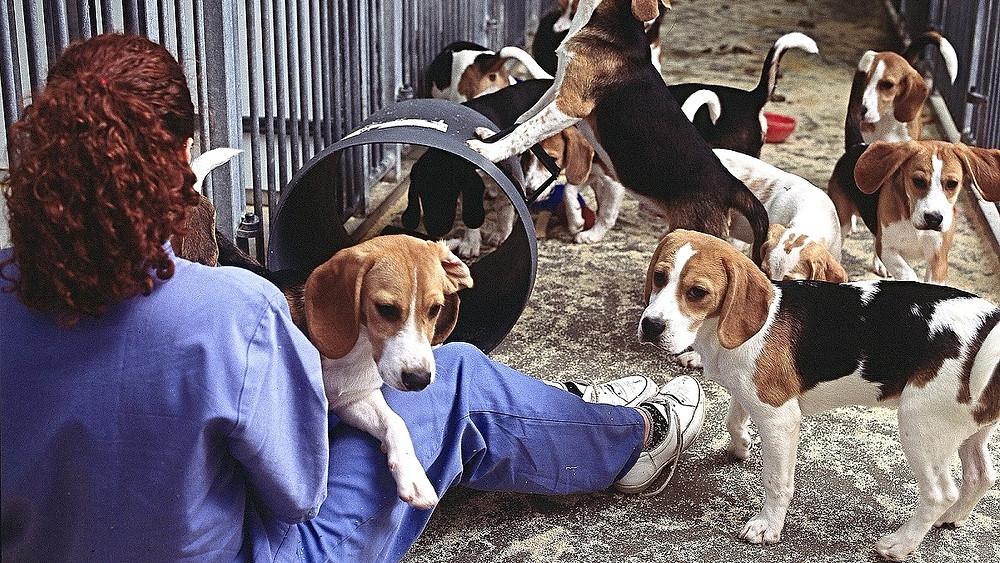 Dyreforsøg er den forkerte vej at gå for medicinalindustrien, og det skader både dyr og mennesker, lyder konklusionen i en ny videnskabelig artikel. Foto: Understanding Animal Research/flickr